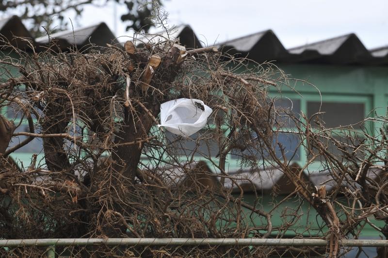 Brasília - Nos arredores de Brasília, sacolas plásticas se espalham e poluem o meio ambiente , sujando árvores e plantas. Foto de Elza Fiuza/ABr.