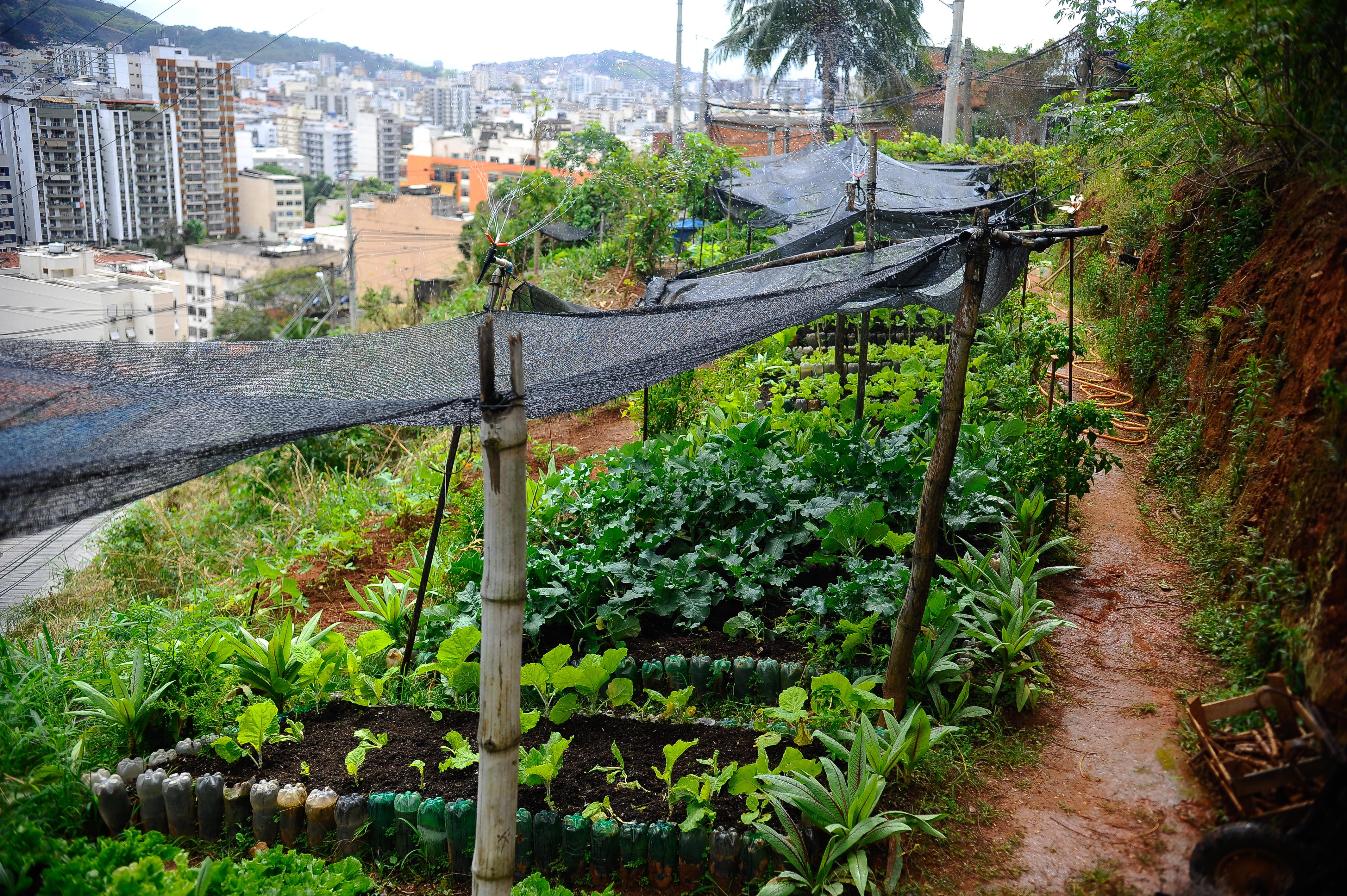 Horta comunitária no Morro da Formiga, na Tijuca, bairro da zona norte do Rio de Janeiro, faz parte do Projeto Hortas Cariocas Tomaz Silva/Agência Brasil