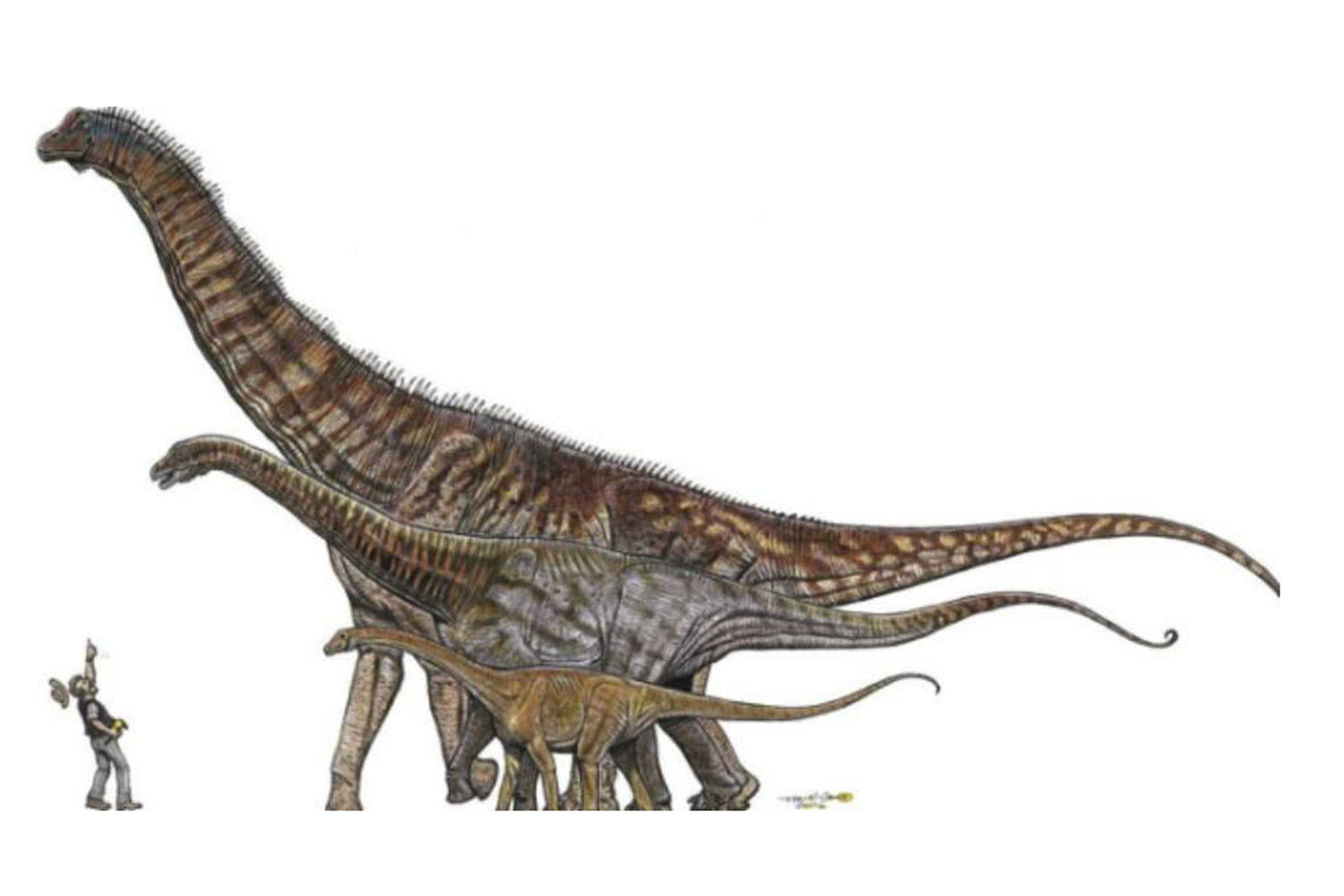 Revelado Fosil Del Dinosaurio Mas Grande De Brasil Agencia Brasil Documental dinosaurios narrado por miguel peñaranda. agencia brasil